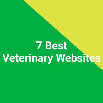 7 Best Veterinary Websites